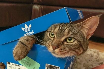 cat meme 1